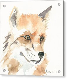 Fox Study 1 Acrylic Print