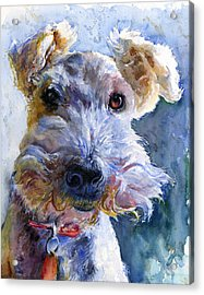 Fox Terrier Full Acrylic Print by John D Benson