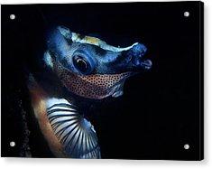 Foxface Rabbitfish Acrylic Print