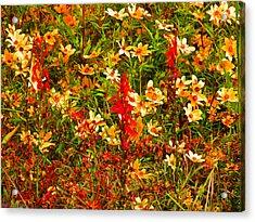 Foxfire 1 Acrylic Print