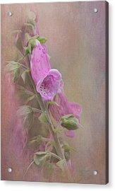 Foxglove Acrylic Print by Angie Vogel