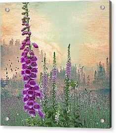 Foxglove In Washington State Acrylic Print