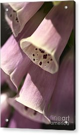 Acrylic Print featuring the photograph Foxglove by Joy Watson