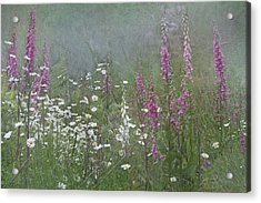 Foxgloves And Daisies Acrylic Print by Angie Vogel