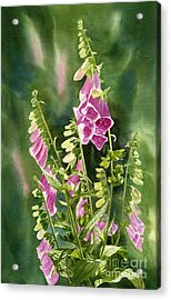 Foxgloves With Background Acrylic Print by Sharon Freeman