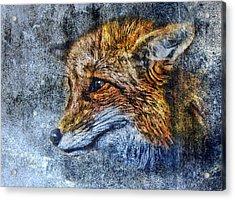 Foxy Acrylic Print by Yury Malkov