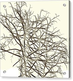 Fractal Ghost Tree - Inverted Acrylic Print by Steve Ohlsen