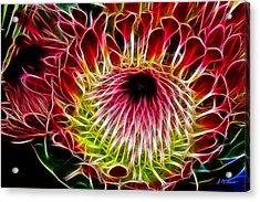 Fractal Protea Acrylic Print by Michael Durst