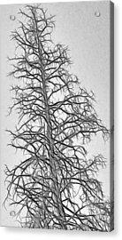 Fractal Tree Abstract Acrylic Print by Steve Ohlsen