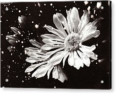 Fractured Daisy Acrylic Print