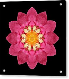 Acrylic Print featuring the photograph Fragaria Flower Mandala by David J Bookbinder