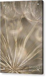 Fragile Acrylic Print by Anne Gilbert