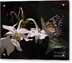 Acrylic Print featuring the photograph Fragile Beauty by Brigitte Emme