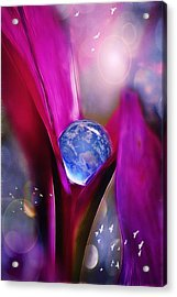 Fragile Acrylic Print by John Rivera