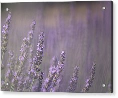 Acrylic Print featuring the photograph Fragrance by Lynn Sprowl