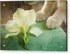 Fragrant Gardenia Acrylic Print
