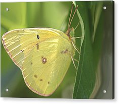 Acrylic Print featuring the photograph Frail Beauty by The Art Of Marilyn Ridoutt-Greene