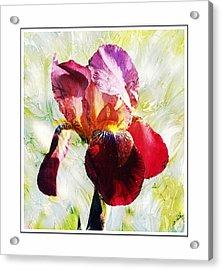 Framed Iris Acrylic Print