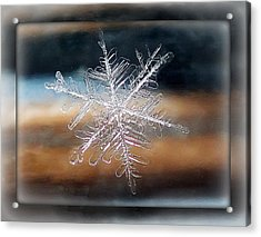 Framed Snowflake Acrylic Print by Lorella  Schoales