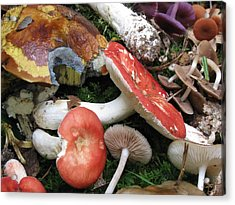France Mushrooms From The Woods Acrylic Print by Dawn E Davis