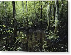 Francis Beidler Forest Acrylic Print by Larry Cameron