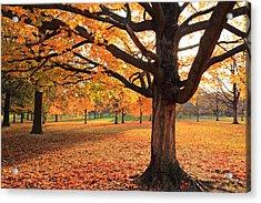 Francis Park Autumn Maple Acrylic Print by Scott Rackers