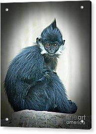 Francois Langur Monkey II Acrylic Print by Jim Fitzpatrick