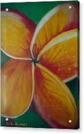 Frangipani Bloom Acrylic Print
