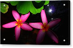 Frangipani Flowers On Water Acrylic Print