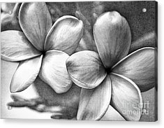 Frangipani In Black And White Acrylic Print by Peggy Hughes