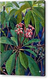 Frangipani Acrylic Print