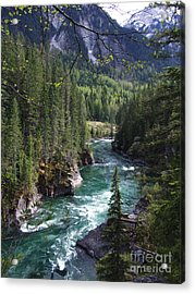 Fraser River - British Columbia Acrylic Print by Phil Banks