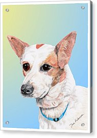 Freckles A Former Shelter Dog Acrylic Print by Dave Anderson