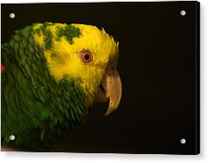 Acrylic Print featuring the photograph Fred The Amazon Parrot by Melissa Messick