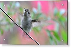Acrylic Print featuring the photograph Fredrick - Ahhhhh I Love Bathing by Debby Pueschel