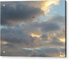 Free As A Bird Acrylic Print by Jean Marie Maggi