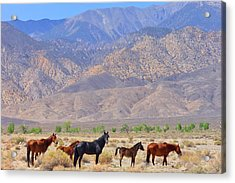 Acrylic Print featuring the photograph Free For Now by Marilyn Diaz