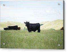 Free Range Acrylic Print by Joe Wigdahl