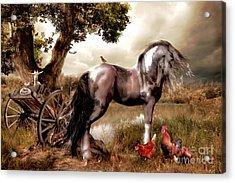 Free Range Acrylic Print by Shanina Conway