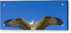 Free Spirit Acrylic Print by Laura Bentley