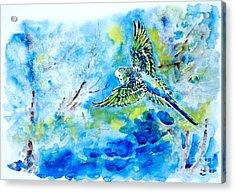 Free Acrylic Print by Zaira Dzhaubaeva