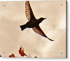 Freedom Acrylic Print by Judy Via-Wolff