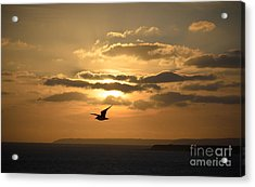 Freedom Acrylic Print by OUAP Photography