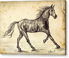 Acrylic Print featuring the drawing Freehand Graphite Horse Study by Ginette Callaway