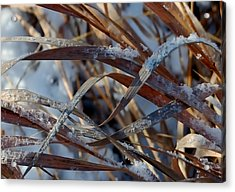 Freeze Dried Acrylic Print by Steven Milner