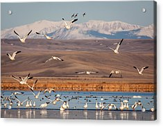 Acrylic Print featuring the photograph Freeze Out Lake Morning by Jack Bell