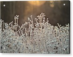 Freezing Cold Acrylic Print by Karen Grist