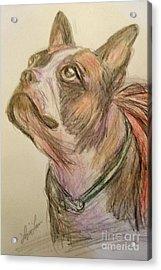 French Bull Dog Acrylic Print by Lyric Lucas