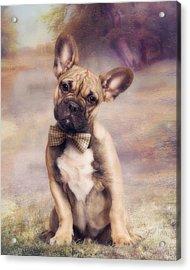 French Bulldog Acrylic Print by Cindy Grundsten
