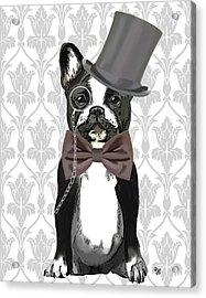 French Bulldog Monsieur Bulldog Acrylic Print by Kelly McLaughlan